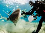 Hình ảnh thợ lặn đùa rỡn với cá mập dưới biển - Ảnh thứ 6