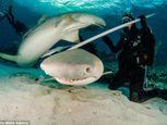 Hình ảnh thợ lặn đùa rỡn với cá mập dưới biển - Ảnh số 1