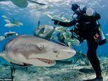 Hình ảnh thợ lặn đùa rỡn với cá mập dưới biển - Ảnh số 2