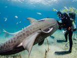 Hình ảnh thợ lặn đùa rỡn với cá mập dưới biển - Ảnh số 4