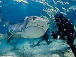 Hình ảnh thợ lặn đùa rỡn với cá mập dưới biển - Ảnh số 5