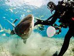 Hình ảnh thợ lặn đùa rỡn với cá mập dưới biển - Ảnh số 6