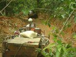 Lâm tặc ngang nhiên phá rừng giữa ban ngày