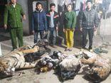 Nghệ An: Phát hiện 2 cá thể hổ đông lạnh giấu trong trang trại