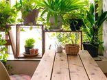 Trồng những cây cảnh này: Nhà vượng, sức khỏe tăng