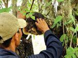 Hà Tĩnh: Vào rừng lấy mật ong, người đàn ông tử vong thương tâm