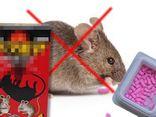 Ăn nhầm thuốc diệt chuột vì tưởng là kẹo, em chết, anh nguy kịch