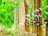 Nhận 456 tỷ động đền bù đất dự án KCN Nam Tân Uyên, công ty mẹ Cao su Phước Hòa (PHR) báo lãi tăng đột biến