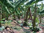 Vụ truy tìm nghi phạm hiếp dâm bé gái trong vườn chuối: Xót lòng lời chia sẻ của mẹ nạn nhân