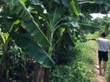 Vụ bé gái 12 tuổi bị hiếp dâm ở vườn chuối: Nghi phạm đã có gia đình, vợ và 3 con đều ở nước ngoài