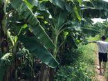 Vụ bé gái 12 tuổi bị hiếp dâm trong vườn chuối ở Hà Nội: Hàng xóm tiết lộ về