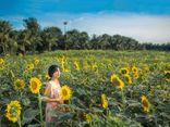 Tư vấn tiêu dùng - Đồi hoa mặt trời Ecopark khoe sắc đón thu sang