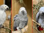 Năm con vẹt chửi thề du khách bị