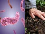 """Quảng Trị: Sau mưa lũ, 4 người tử vong vì mắc """"vi khuẩn ăn thịt người"""" whitmore"""