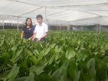 Bí quyết làm giàu - Bắc Ninh tạo đột phá mới từ nông nghiệp công nghệ cao