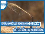 Video: Kinh hãi cảnh hổ mang phun nọc Mozambique cực độc giết chết đồng loại rồi nuốt chửng