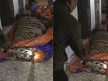 Phát hiện cá thể hổ nặng 250kg chết trong nhà dân ở Hà Tĩnh