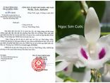 Thương vụ mua bán lan var Ngọc Sơn Cước 250 tỷ đồng: Chi cục Thuế Đông Triều vào cuộc