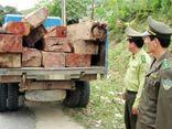 Lâm tặc lái xe chở gỗ lậu đâm chết một cán bộ kiểm lâm
