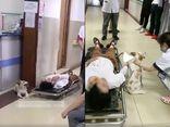 Cộng đồng mạng - Cô chủ gặp tai nạn, chú chó cưng cố chấp làm một việc khiến ai nấy rơi lệ