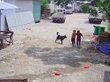 Cụ bà qua đời thương tâm vì bị chó dữ tấn công, hành động của người tài xế gần đó gây phẫn nộ
