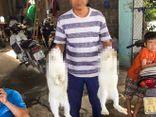 Hà Nội: Phát hiện thi thể người đàn ông dưới ao sau 4 ngày mất tích bí ẩn