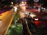 Tin trong nước - Hà Nội đánh chuyển hơn 200 cây phong lá đỏ do không hợp khí hậu
