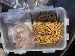 Hà Nội: Bắt giữ lô hàng đông trùng hạ thảo không rõ nguồn gốc lớn nhất từ trước đến nay