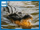 Cuộc chiến sinh tồn: Tranh nhau thức ăn, cá sấu tung đòn