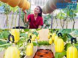Cộng đồng mạng - Tròn mắt trước vườn dưa sai trĩu quả trên sân thượng của cô gái Sài thành