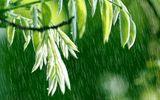 Dự báo thời tiết 8/3/2015: Hà Nội sáng và đêm có mưa nhỏ