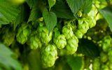 8 lợi ích bất ngờ khi uống bia