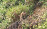 Truy tìm nguồn gốc con khỉ