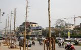 Vụ chặt cây xanh: Sở Xây dựng Hà Nội trả lời câu hỏi của báo chí