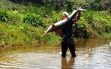 Bắt được cặp cá tầm khổng lồ nặng 40kg