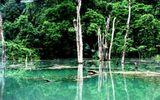 Khám phá hình ảnh thu nhỏ của Vườn quốc gia Phong Nha – Kẻ Bàng