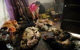 Nhói lòng hình ảnh tại lò giết mổ chó ở Trung Quốc