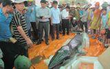 Ngư dân Thanh Hóa phát hiện xác cá voi nặng 500kg trôi dạt vào bờ biển
