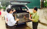 VQG Phong Nha – Kẻ Bàng tiếp nhận cá thể khỉ mắt đỏ quý hiếm