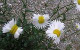Rợn người cảnh thực vật bị biến dạng do thảm họa hạt nhân Fukushima