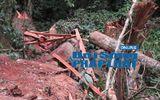Bắt quả tang nhóm lâm tặc phá rừng đặc dụng Cha Lo