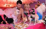 Đại gia chi hơn 800 triệu tổ chức tiệc cưới cho... chó cưng