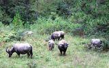Xây dựng Công viên bảo tồn động vật hoang dã Tây Nguyên