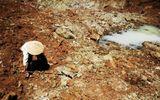 Hạn mặn còn kéo dài, Ban chỉ đạo TƯ về phòng chống thiên tai ra công điện khẩn