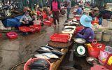 Cá chết hàng loạt ven biển: Nguy cơ ế cá biển ở Quảng Bình