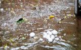 Liên tiếp xuất hiện mưa đá ở miền Tây Nghệ An