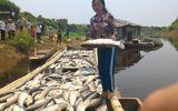 Cá chết trên sông Bưởi: Thanh Hóa đề nghị Thủ tướng Chính phủ hỗ trợ kinh phí