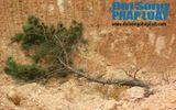Nghệ An: Rừng núi bị xẻ thịt tan hoang cạnh QL48