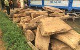 """Để """"lọt"""" gỗ qua trạm, hàng loạt cán bộ kiểm lâm ở Thanh Hóa bị kỷ luật"""