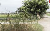Bắt kẻ cướp của hiếp dâm U70 giữa cánh đồng